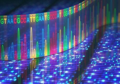 Secuencia de bases nitrogenadas que constituyen una molécula de ADN