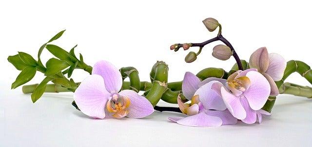 Usa plantas de bambú para decorar tu baño