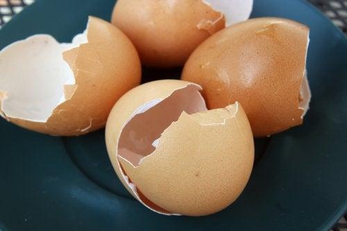 6 cosas que puedes hacer con cáscara de huevo en el hogar