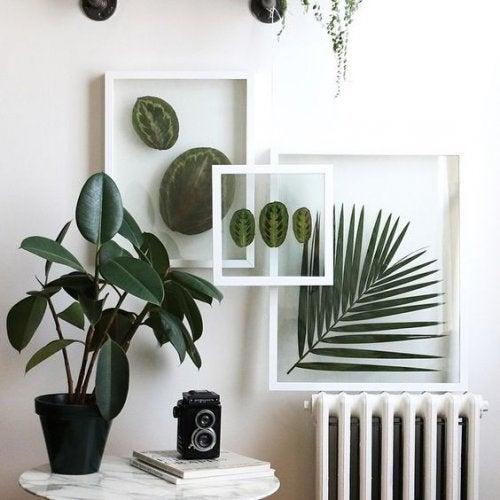 Cuadros y accesorios botánicos.