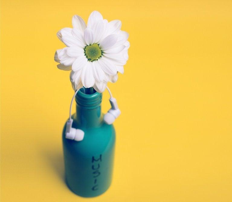 Accesorios botánicos para complementar tu habitación
