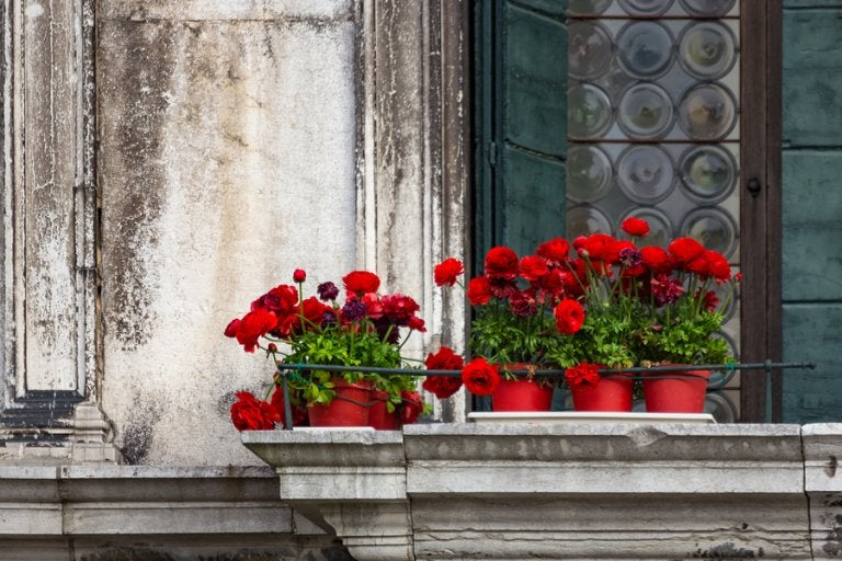 5 tipos de flores para un jardín en el balcón