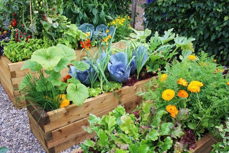 Ideas para diseñar jardines con flores