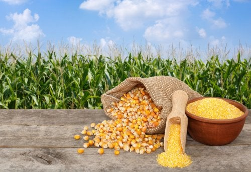 5 deliciosas recetas que puedes hacer con una lata de maíz