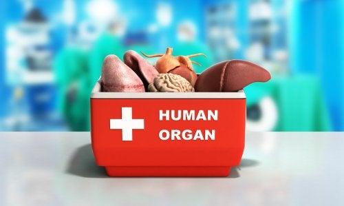 El sistema de conservación de los pulmones para un trasplante