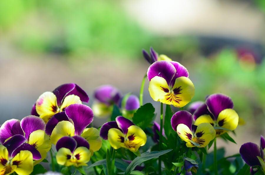Flores para decorar tu balcón