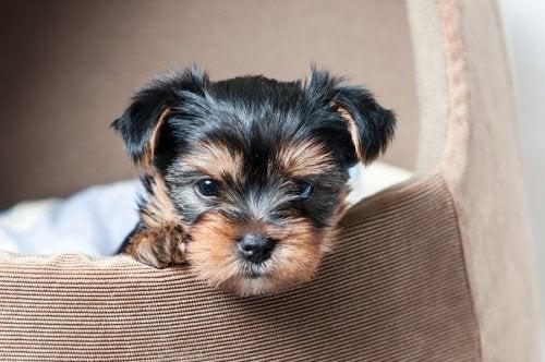 4 maneras de hacer casas para tu mascota con materiales reciclados
