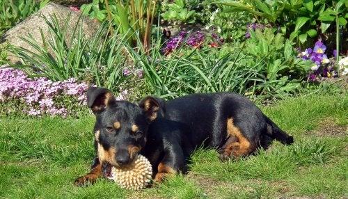 Combate las pulgas y las garrapatas de tu mascota con plantas
