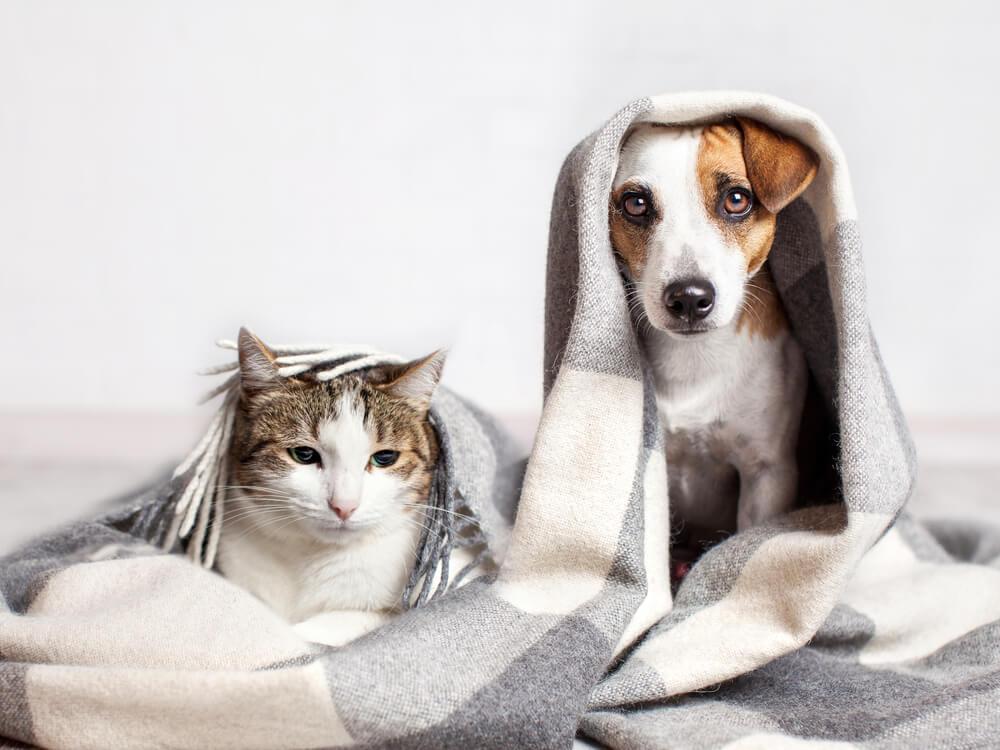 Cómo limpiar tu casa si tienes mascotas