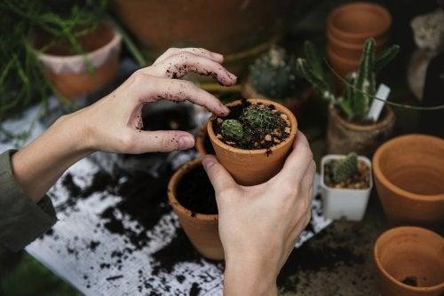 Cuáles son los cuidados especiales que debes darle a las plantas del jardín