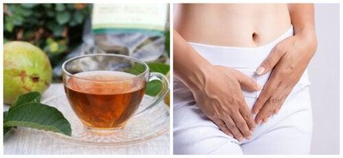 3 remedios con hojas de guayabo para el flujo vaginal excesivo