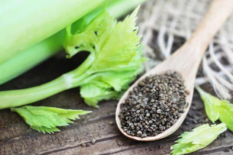 Infusión de semillas de apio: un remedio natural para la hipertensión