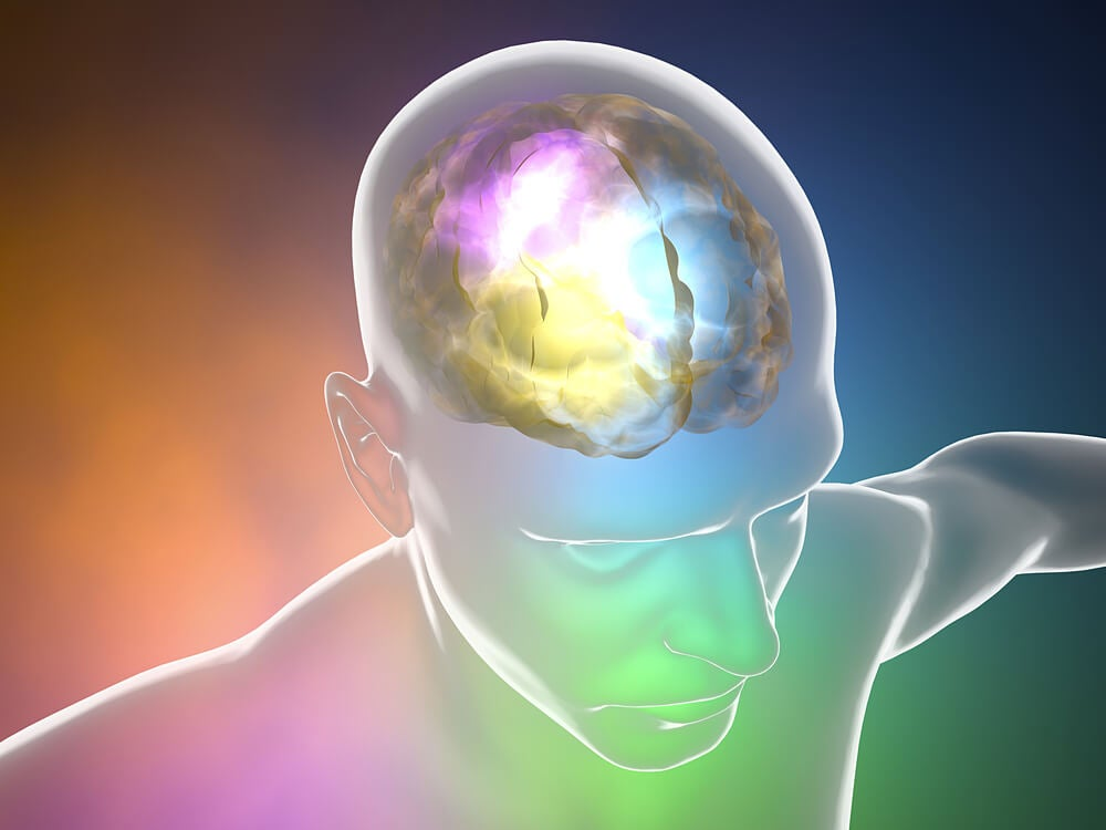 Recreación digital del cerebro. Descerebración.