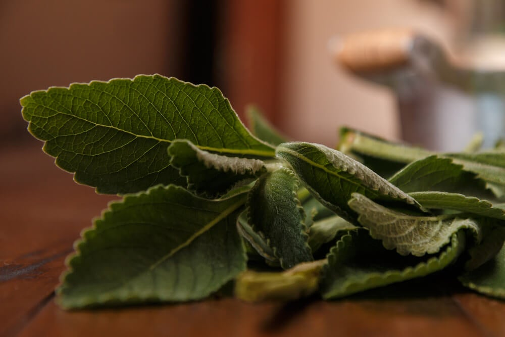 Mejora la salud de tu hígado con un simple remedio: el boldo