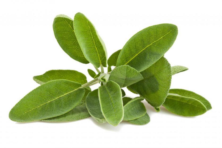 7 soluciones herbales para tratar la fibromialgia
