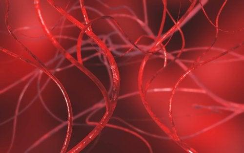 Imagen en 3D de vasos sanguíneos varicocele