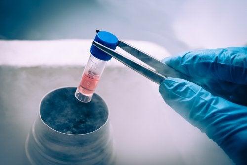 Conservación de células madre: ¿en qué consiste?