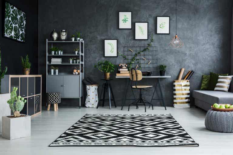 5 plantas para espacios con poca luz