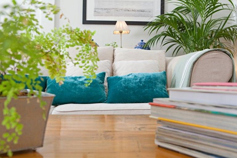 4 plantas para un diseño interior contemporáneo