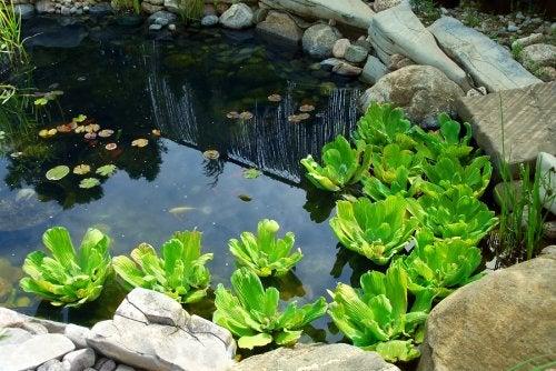 3 formas diferentes de tener estanques en casa