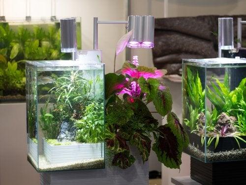 Cómo hacer tus propias lámparas terrarios en casa