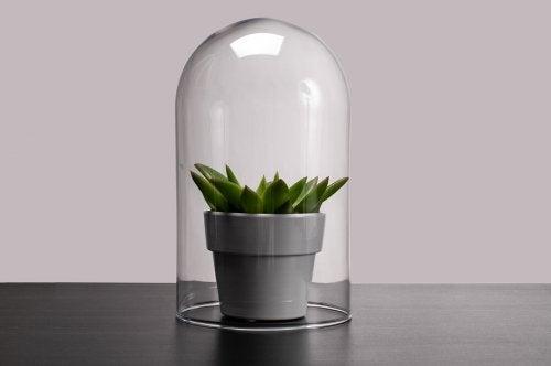 Lámpara en terrario