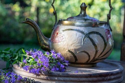 5 beneficios del hisopo y cómo usarlo en remedios