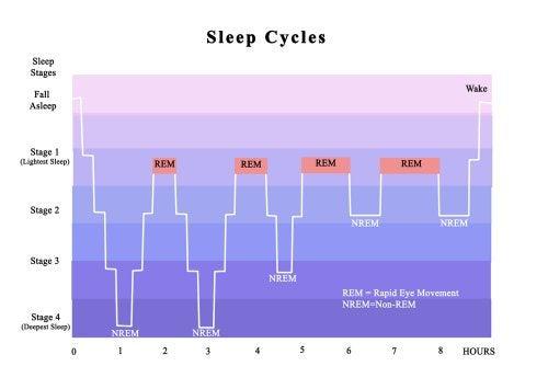 Ciclos circadianos durante el sueño.