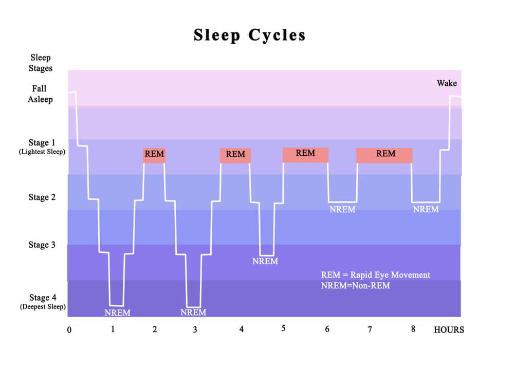 ciclos sueño ritmos circadianos insomnio