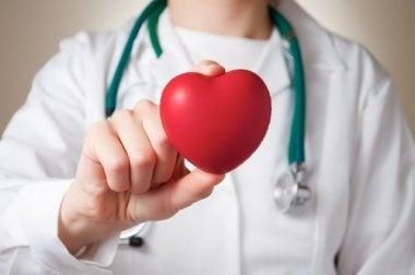 Juguete de corazón en manos de médico