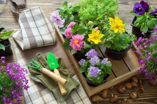 Materiales de jardinería y flores