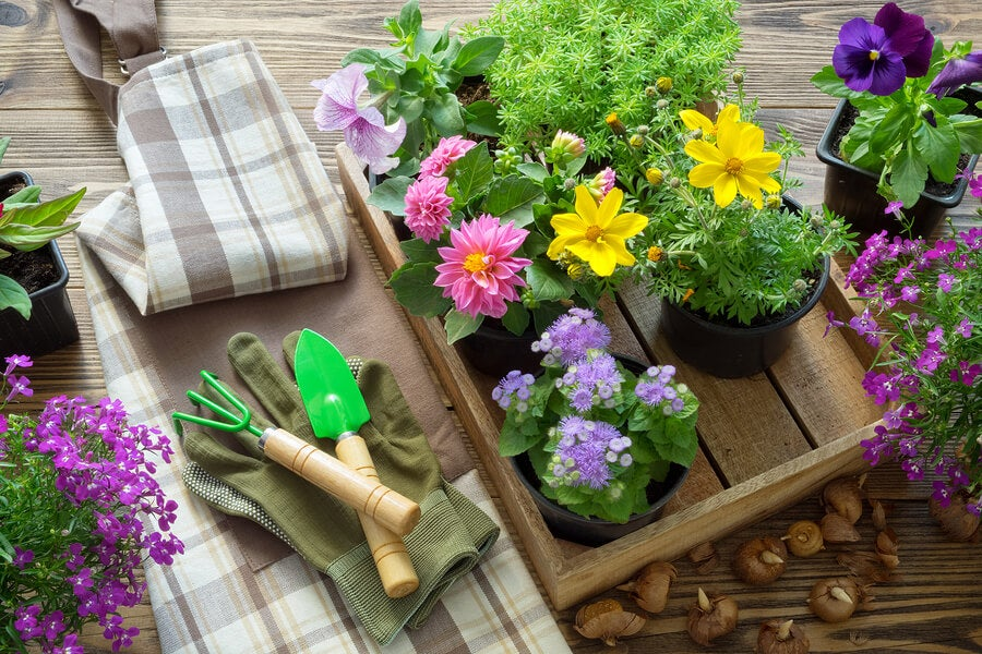 Jardinería y herramientas.