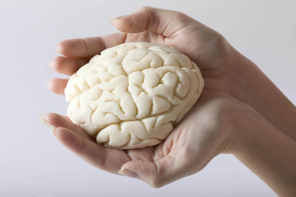 Cerebro en manos de mujer.