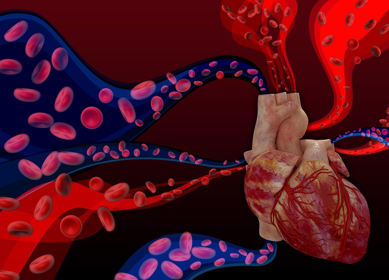 El corazón es la bomba del cuerpo.