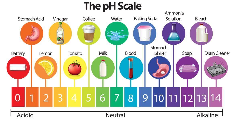 tu cuerpo es ácido: escala del ph