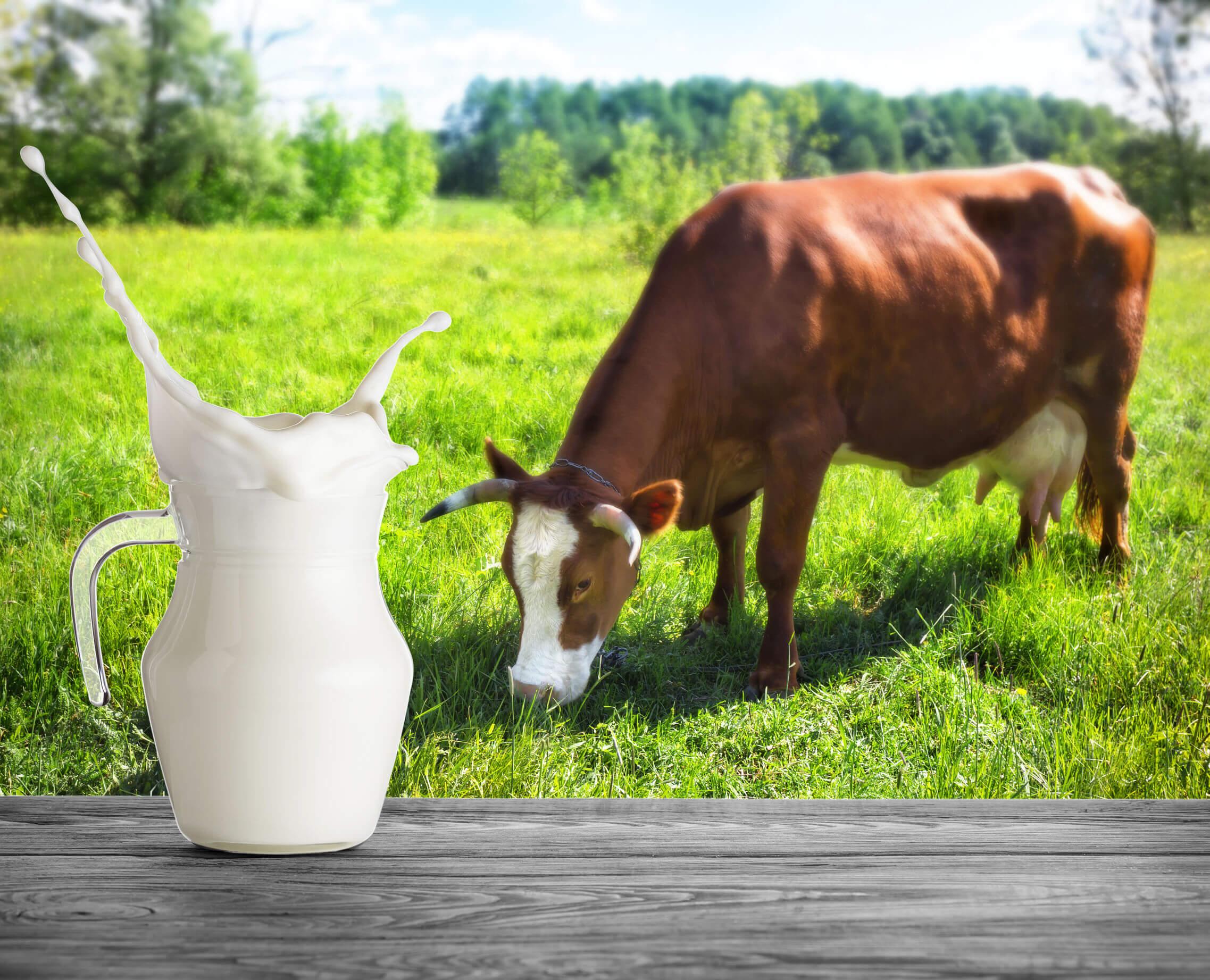 Al comparar la leche descremada versus leche entera podría existir controversia.