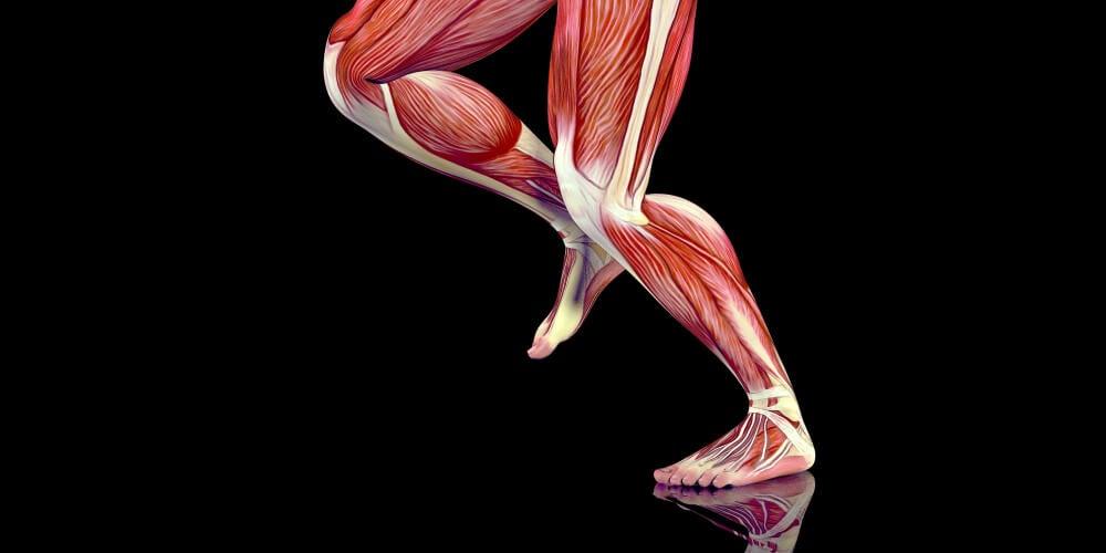 sistema muscular y puntos gatillo