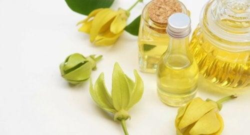 Flor y aceite esencial de ylang ylang