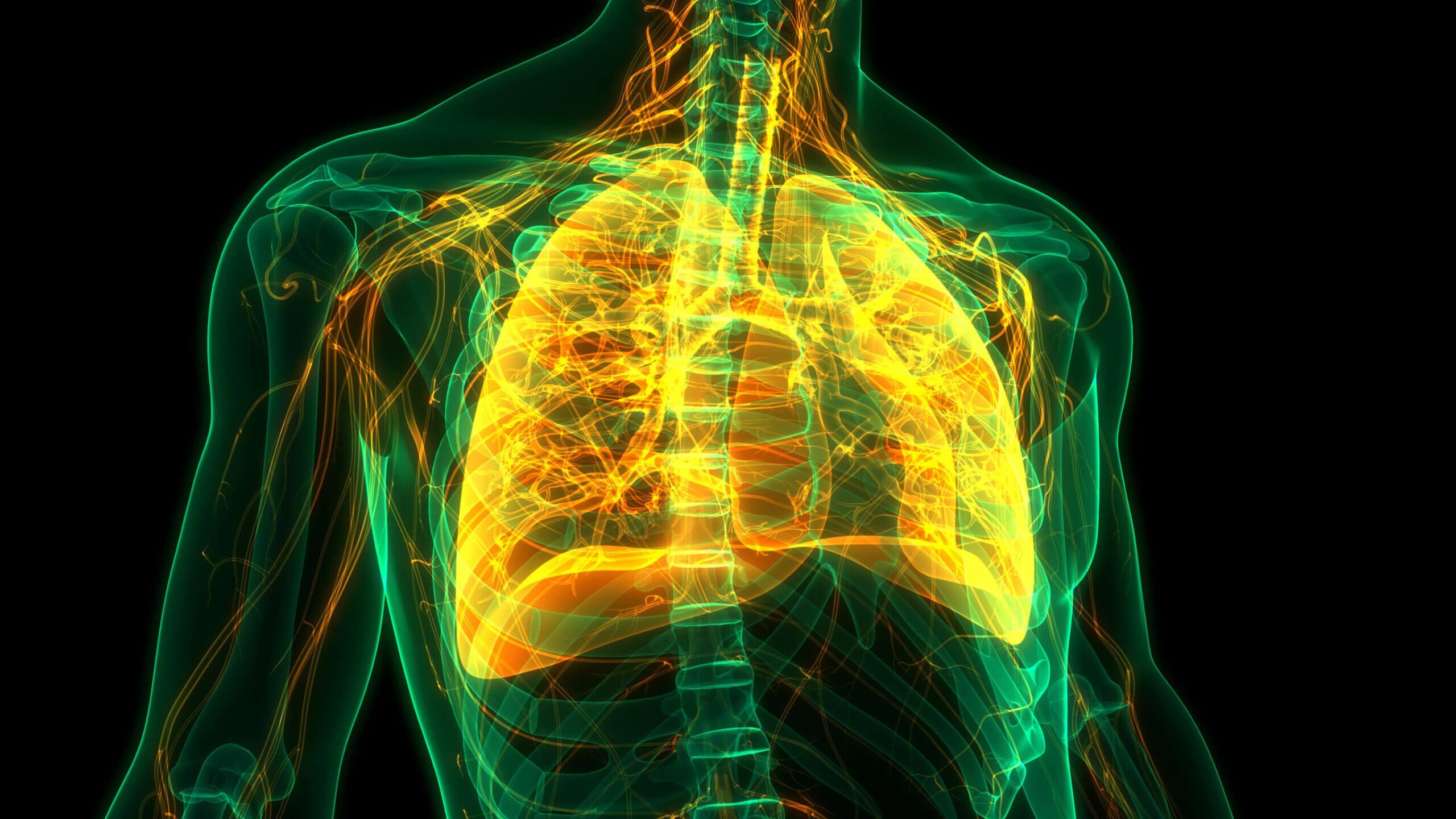 Pulmones con defensas contra la gripe.