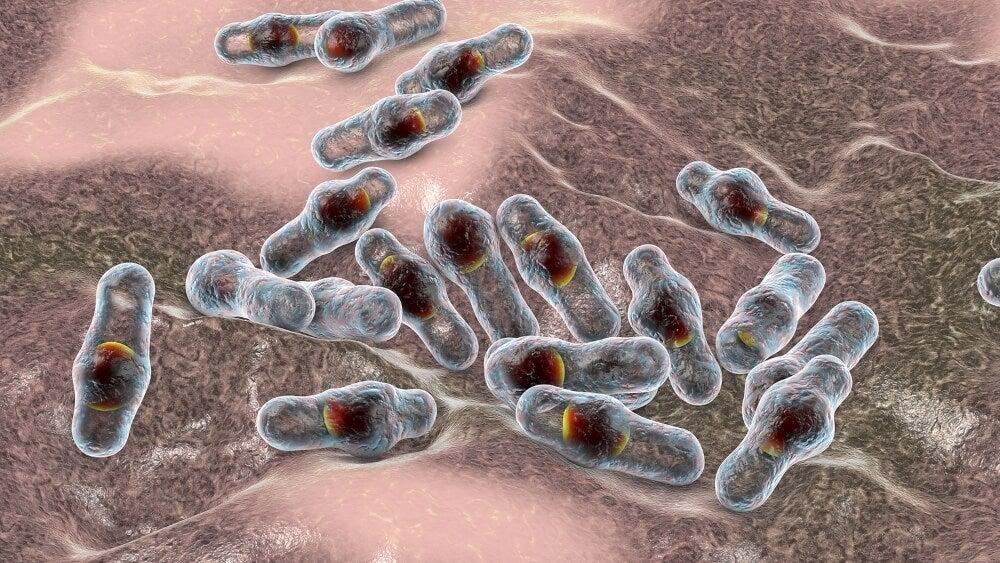 Bacteria que causa la gangrena.