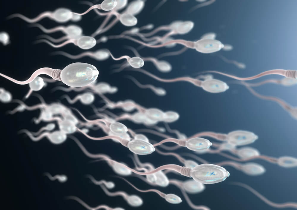 Espermatozoides en el semen.
