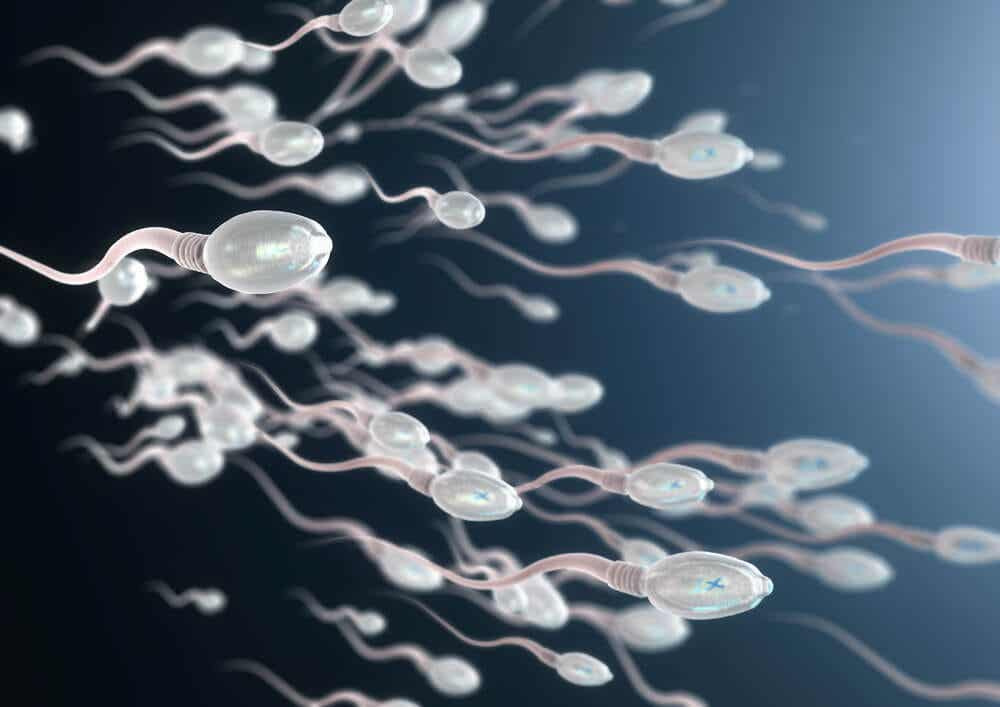 Espermatozoides.