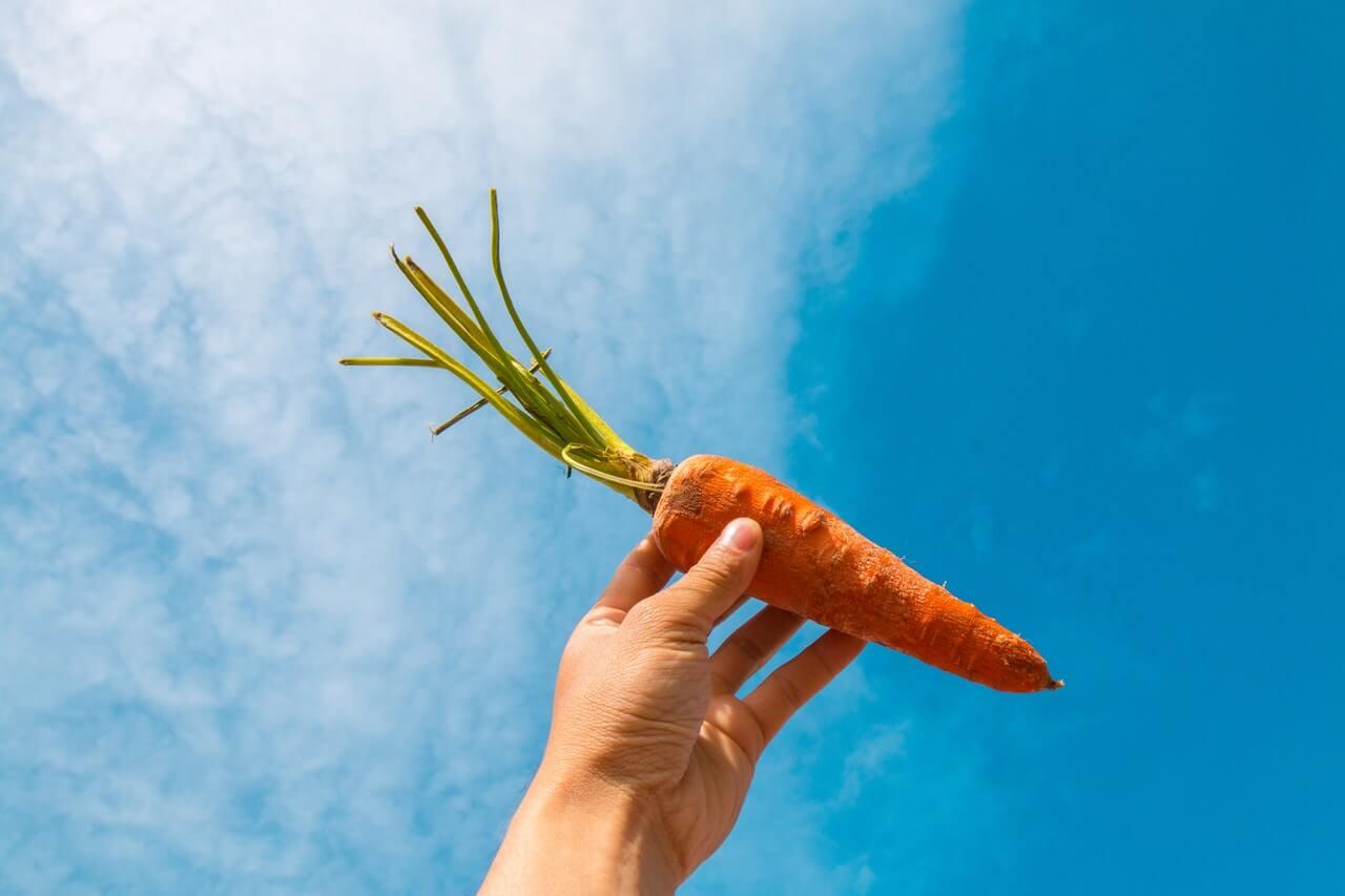 """¿Qué son los carotenos y cuáles son sus beneficios"""""""