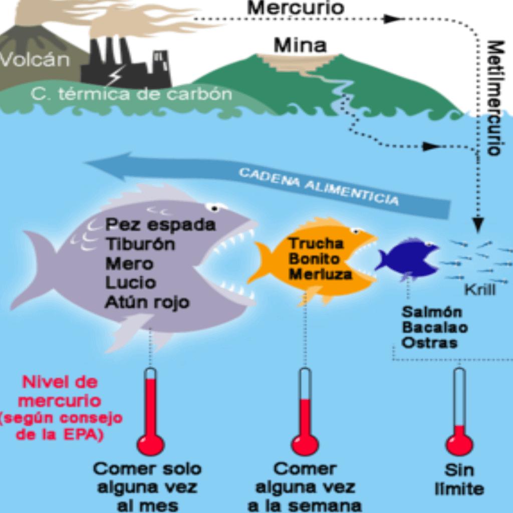 Contaminación de peces con mercurio.