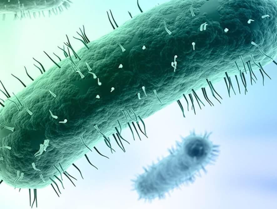 Imagen microscópica del Micoplasma Genital