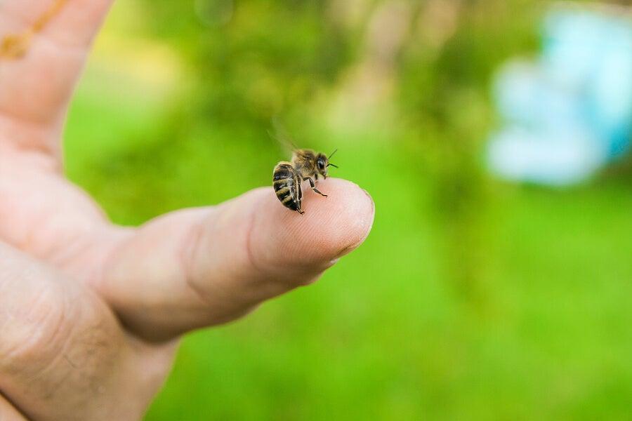 4 aceites esenciales para calmar las picaduras de abejas