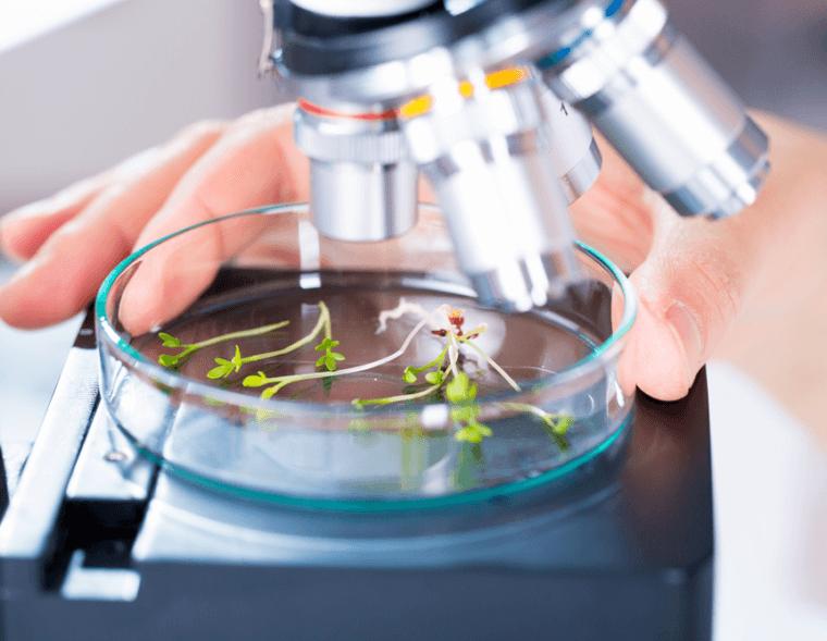 Plantas laboratorio