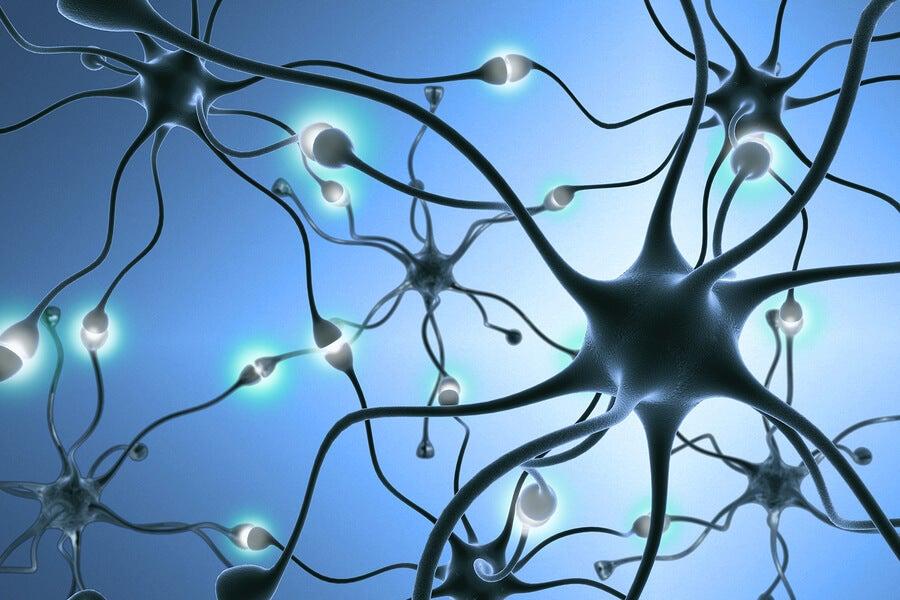 ¿Qué son las neuronas?