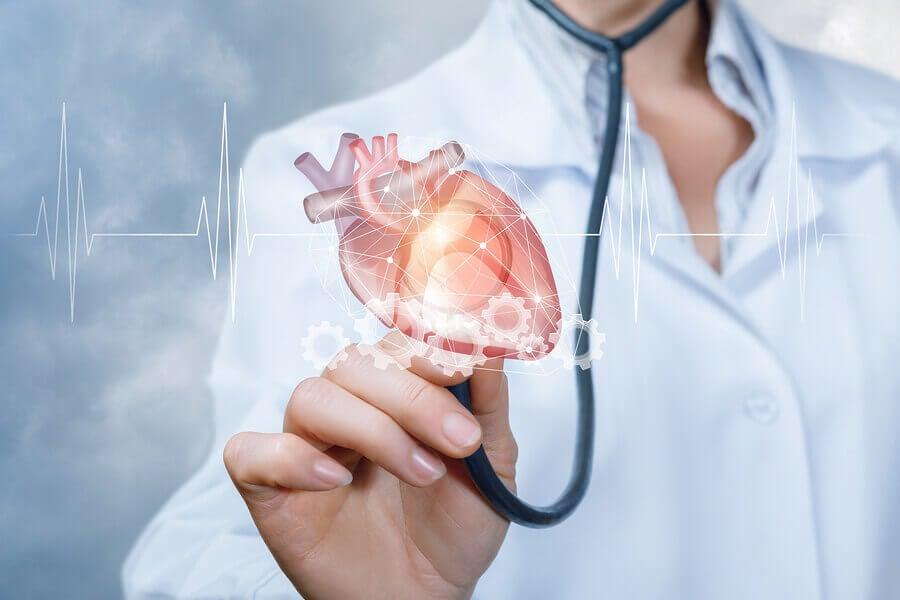 Anatomía del corazón humano.