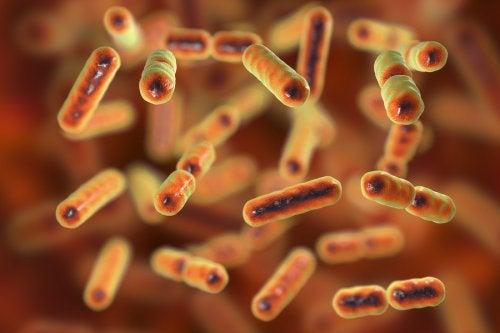 ¿Qué es la disbiosis intestinal?